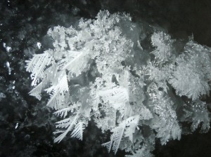 A photo of frost flowers grown in a lab
