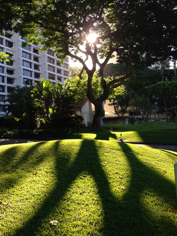 The morning Light and Shadows of January in Honolulu