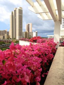 Overlooking the bougainvillea at the Honolulu Convention Center