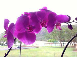 an orchid on a rainy Palm Sunday