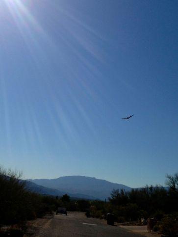a bird in flight in the sunlight