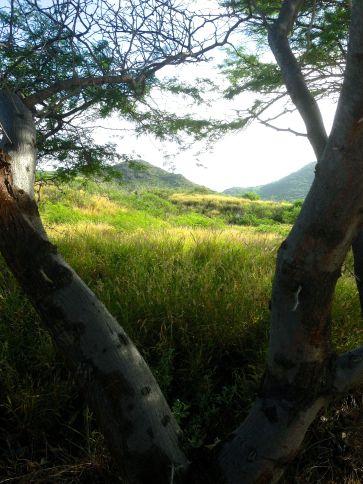 Looking inland toward Mahapuu Head