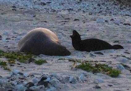 Mommy Monk Seal and Baby