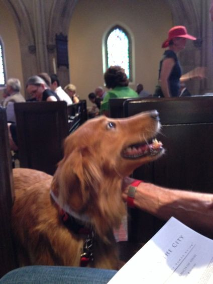 Devoted Dog in St. James Church