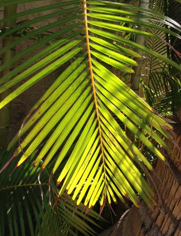Palm branch in the sunlight