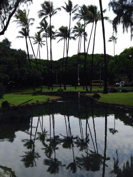 Palms reflected on pool at Kapiolani Park