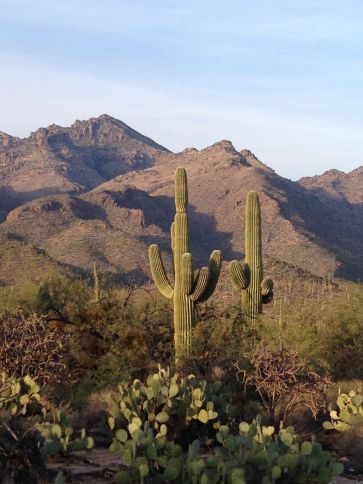 looking north in Saguaro National Park