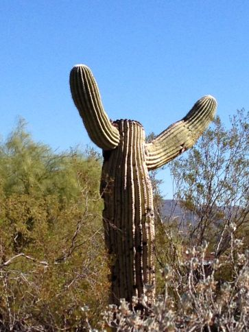 A Saguaro asking WHY?