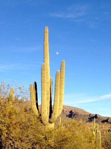 moon & saguaro