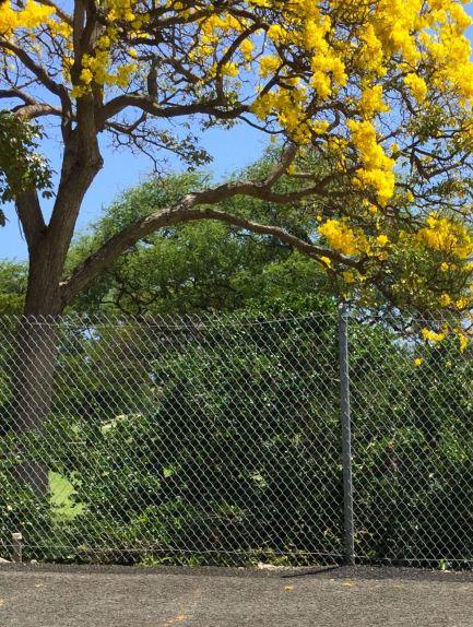 gold tree at entrance