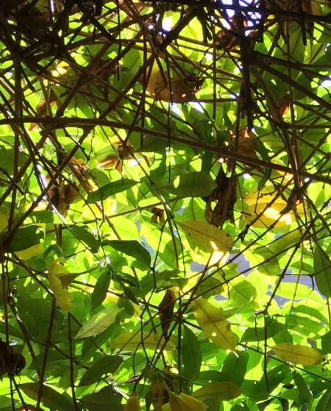 Leaves, Branches and Light