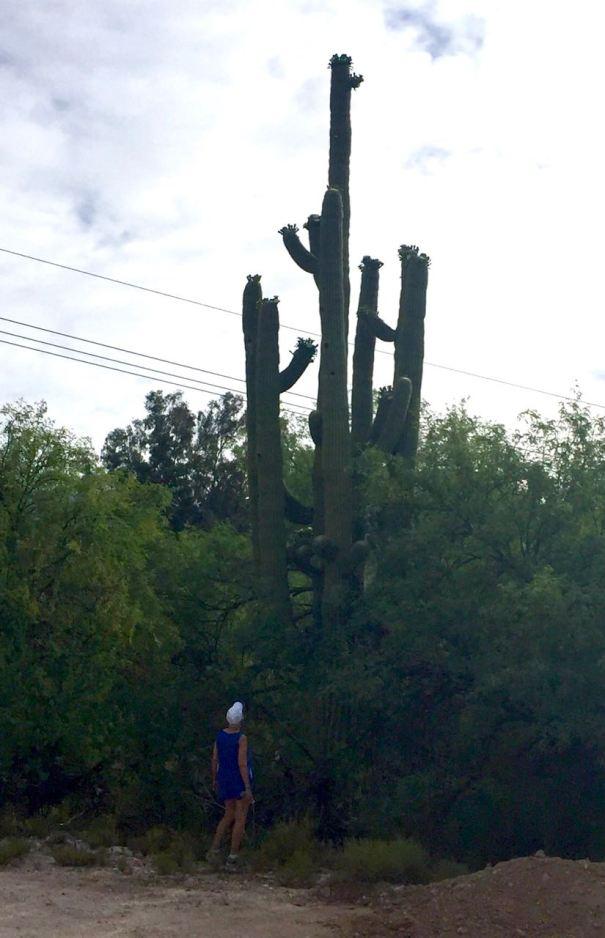Saguaro and me
